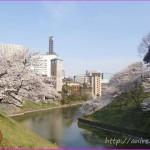 「願い続ければ必ず叶う!」桜満開シーズンに思うこと