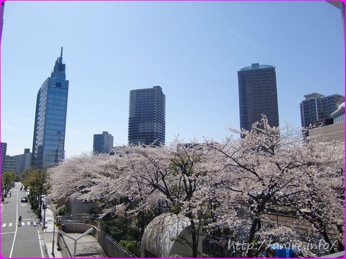 川崎駅前の桜2014