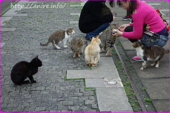 駅前で餌を買ってあげる