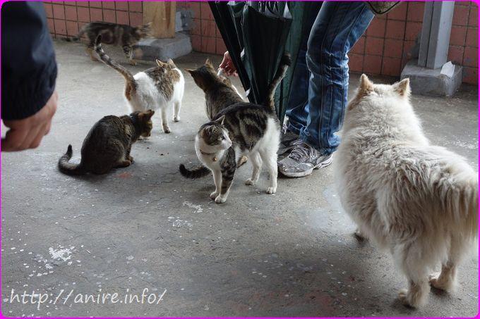ネコが餌に寄ってくる