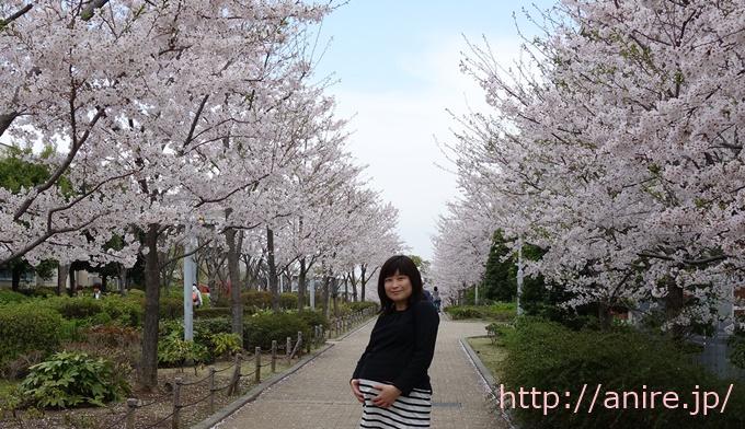 桜と臨月1