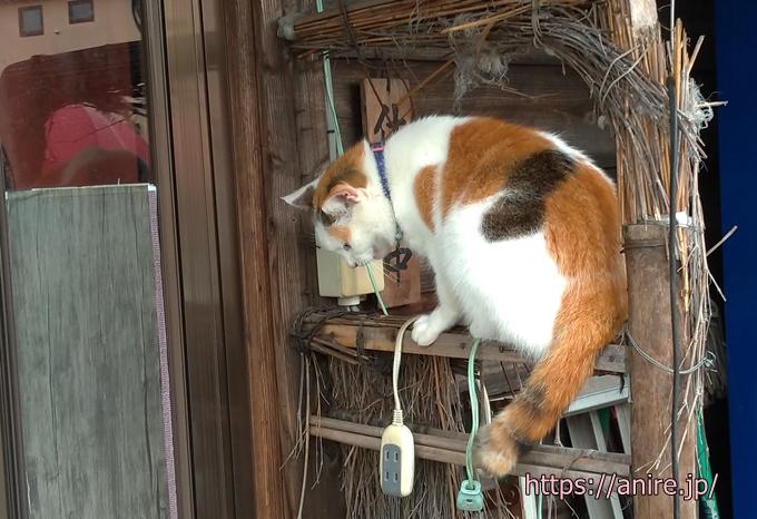 ネコ賃貸戸建